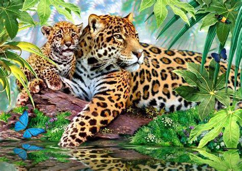 leopard gifs bilder leopard bilder leopard animationen