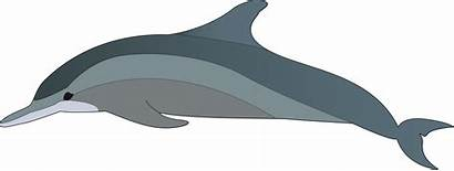 Dolphin Clipart Dolphins Realistic Wholphin Dophin Tucuxi