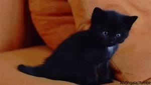 kitten with blue eyes | Tumblr