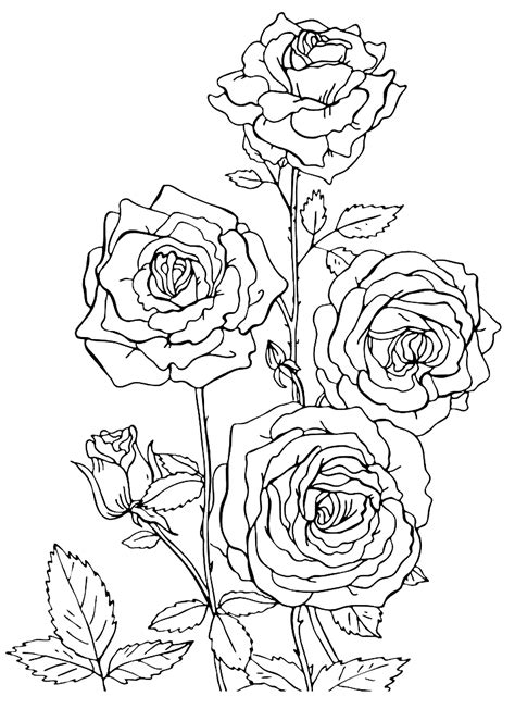 Coloring Roses by Roses Coloring Pages To And Print For Free
