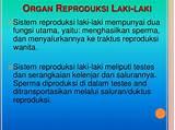 Sistem, reproduksi, manusia laki - laki & Perempuan)