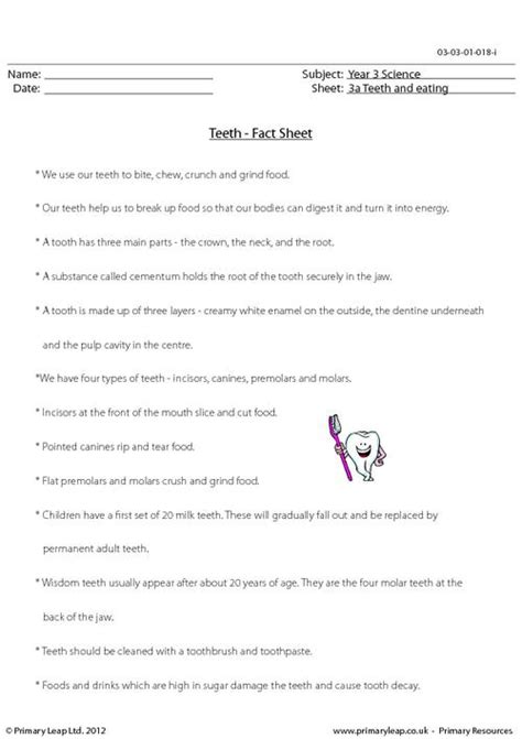 teeth fact sheet primaryleap co uk