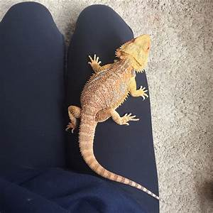 Bearded dragon and tank lights for sale