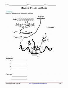 Protein Synthesis Diagram Worksheet Answer Key