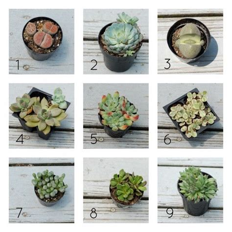 types of succulents 17 best ideas about types of succulents on pinterest names of succulents cactus types and