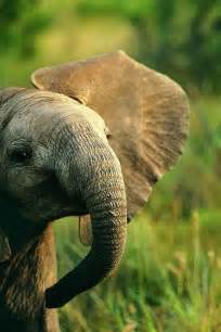 Cute Baby Elephants Animals