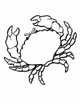 Coloring Crab Pages Animals Colouring Sea Shells Animal Printable Crabs Marine Shell Print Realistic Clip Seashell Cliparts Crawfish Clipart Drawing sketch template
