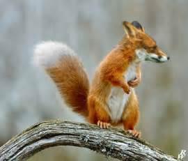 Fantasmical Photoshopped Animal Hybrids - artFido's Blog