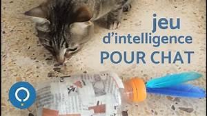 Jouets Pour Chats D Appartement : jeu d 39 intelligence pour chat youtube ~ Melissatoandfro.com Idées de Décoration