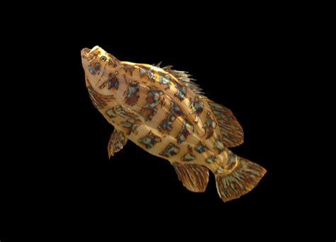 tripletail triple tail metal fish