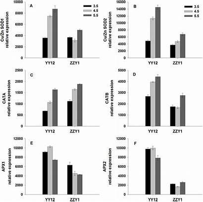 Expression Ratio Gene Relative Ratios Actin Genes