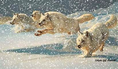 Gifs Wolves Animals