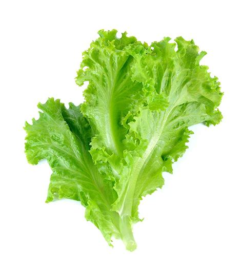 benefits  lettuce  skin hair  health