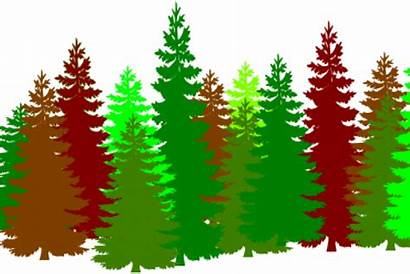 Forest Clipart Trees Cartoon Lots Huge Tree