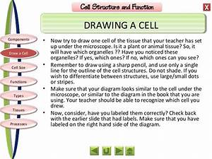 Biology M1 Cell Structure And Function