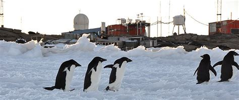 Research Ghostwriter Us by Sixty Years Of Antarctic Research What The Frozen