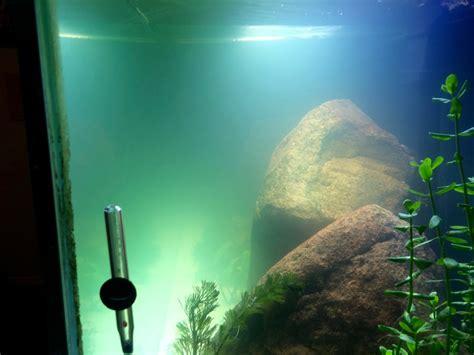 super cloudy mess algae bloom  bacteria bloom