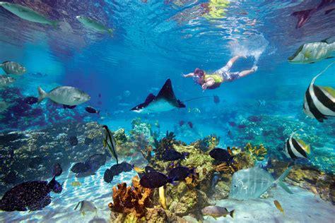 the orlando alternative seaworld parks entertainment