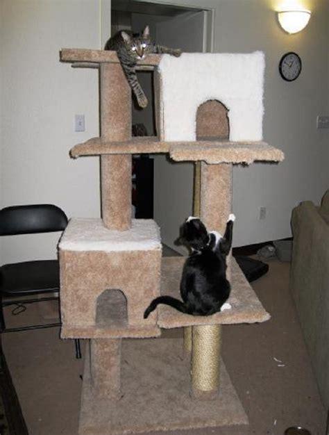 comment faire un arbre 224 chat arbre 224 chat