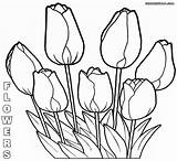 Coloring Flower Pages Rose Flowers Sheet Nature sketch template