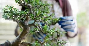 Bonsai Baum Schneiden : bonsai richtig schneiden mein sch ner garten ~ Frokenaadalensverden.com Haus und Dekorationen