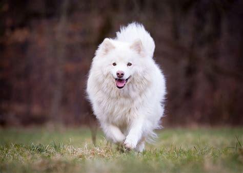 healthiest dog breeds lifevantage