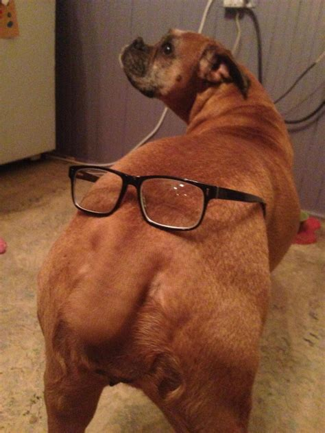 boxer dog derp dump       reasons