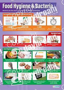 Food Hygiene And Bacteria