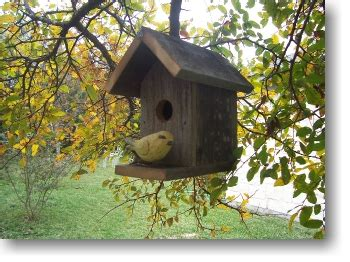 classic birdhouse