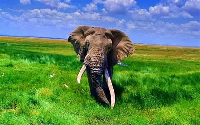 Elephant African Wallpapers Desktop Elephants Background Backgrounds