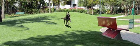 artificial grass for dogs and other pets xgrass