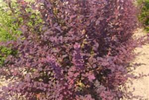 Arbustes Décoratifs à Fleurs : arbustes floraison d corative de printemps ~ Premium-room.com Idées de Décoration