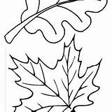Leaf Coloring Maple Fall Autumn Oak Leaves Outline Pages Clipartpanda Clipart Netart sketch template