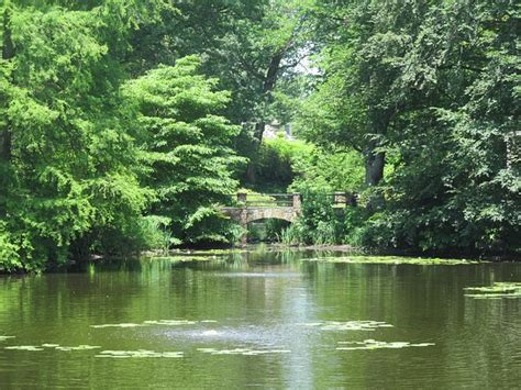 photo pond summer green peaceful  image