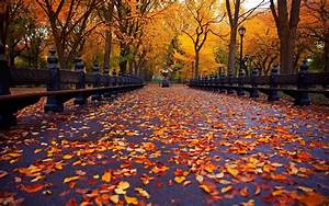 Ultra, Hd, Autumn, Wallpapers