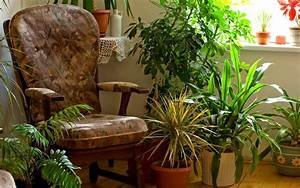 6 Tips For Moving Your Houseplants Indoors For Winter