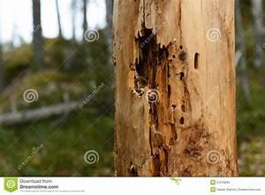 Achat Tronc Arbre Decoratif : tronc d 39 arbre infest d 39 insectes photo stock image 57279263 ~ Zukunftsfamilie.com Idées de Décoration