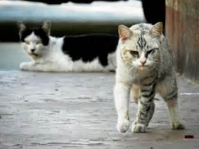 what to do with a stray cat how to keep stray cats away a guide that works