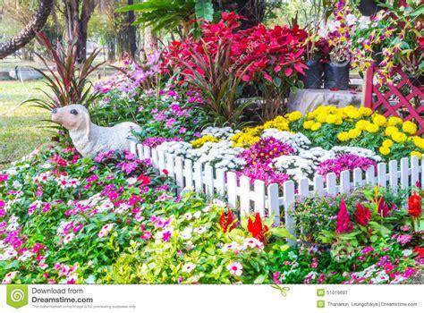 beautiful flower garden stock photo image 51019697