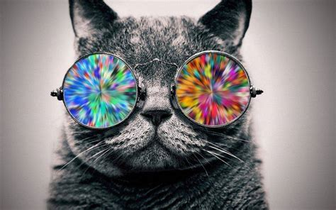 cat glasses animals selective coloring wallpapers hd