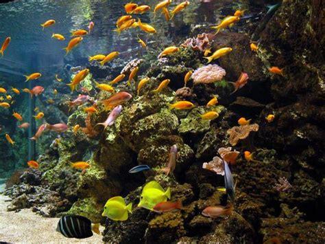 aquarium tropical de la porte dor 233 e 12e l