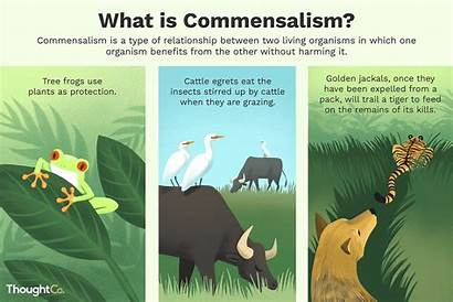 Commensalism Examples Definition Type Species Relationships Interaction