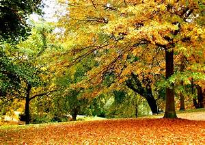Wallpapers, Fall, Leaves