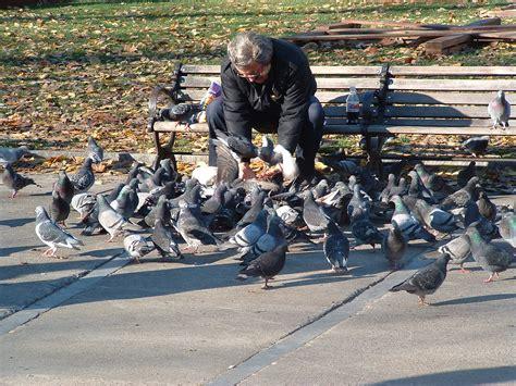 file man feeding pigeons jpg wikimedia commons