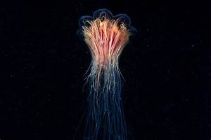 Marine Photographer Documents the Earth's Most Unusual ...