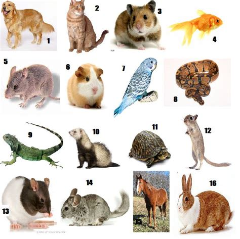 Can You Name The Common Pets By Their Picture? (btw, Just