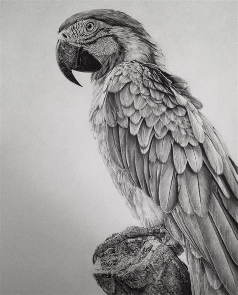 Stunning Photorealistic Graphite Drawings By Monica Lee
