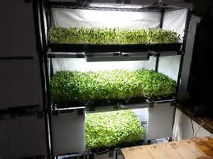 Indoor Herb Garden Light by Sunflower Microgreens Growing Indoors Flourescent Light