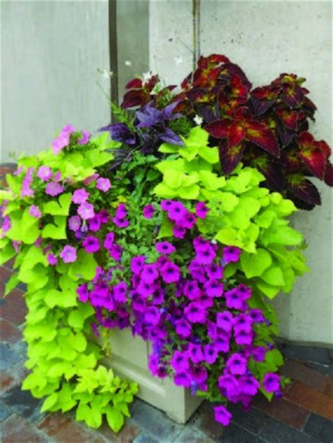 best potted flowers how to choose the best flower container for your home boston design guide