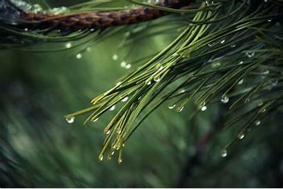 Pexels Pine Water